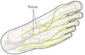 nerfs des pieds